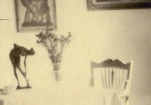 Das stille Leben des Sammlers Kempinski. Image courtesy Exile.
