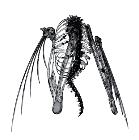Heterocetera EP cover (front). Artwork by Alberto Troia.