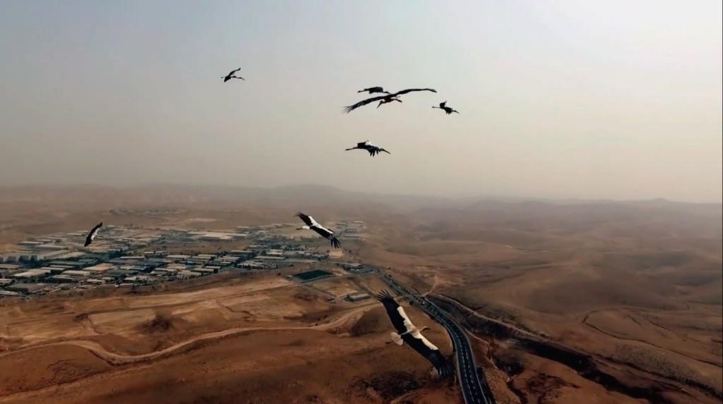 Heba Y Amin, As Birds Flying, video still, (2016). Courtesy the artist.