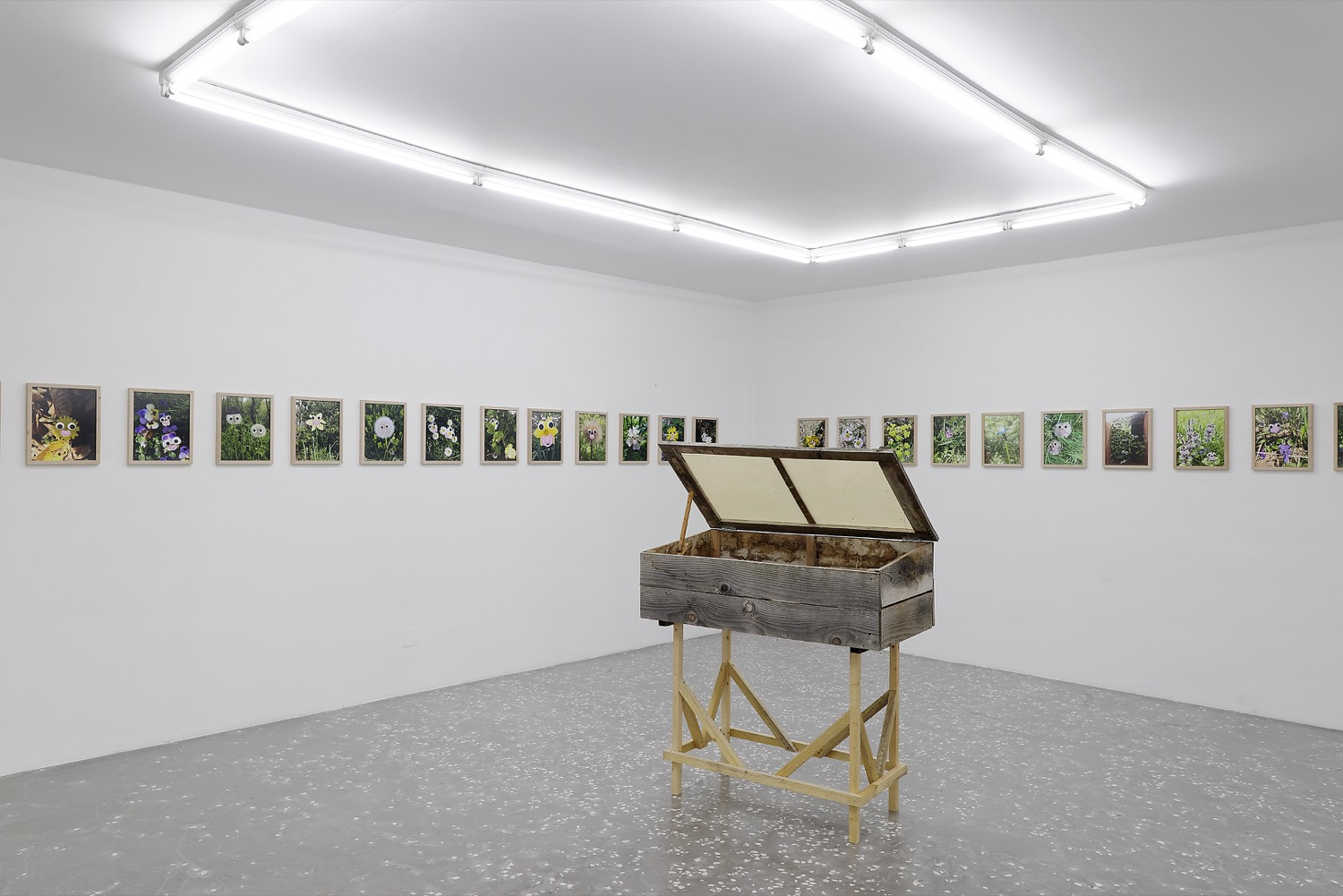 Cédric Fargues, Bébéfleurs (2016). Installation view. Courtesy New Galerie, Paris.